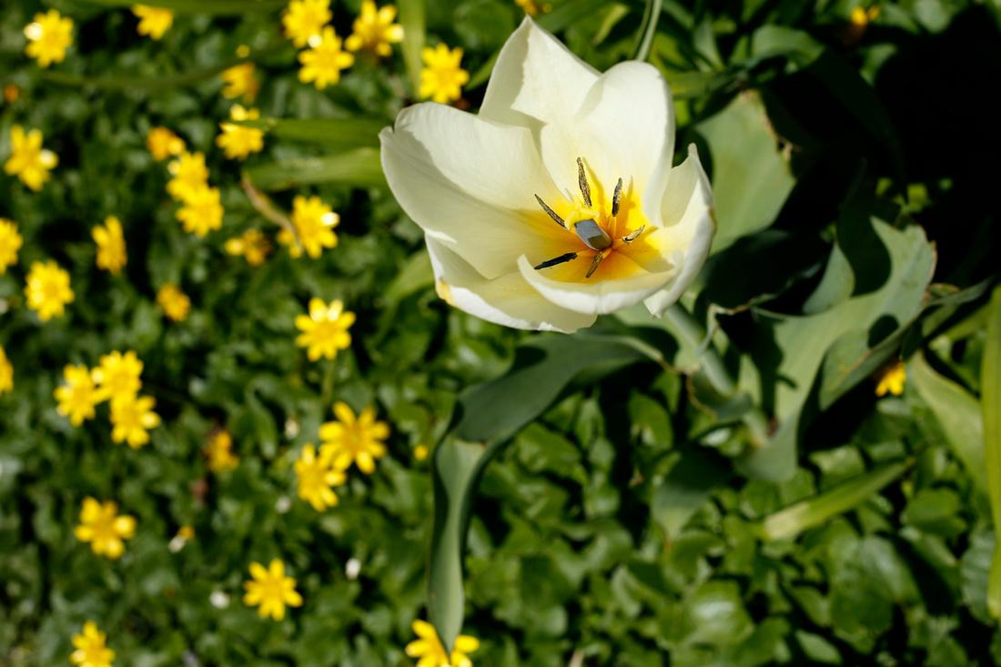 whiteyellowflower_TK_0026