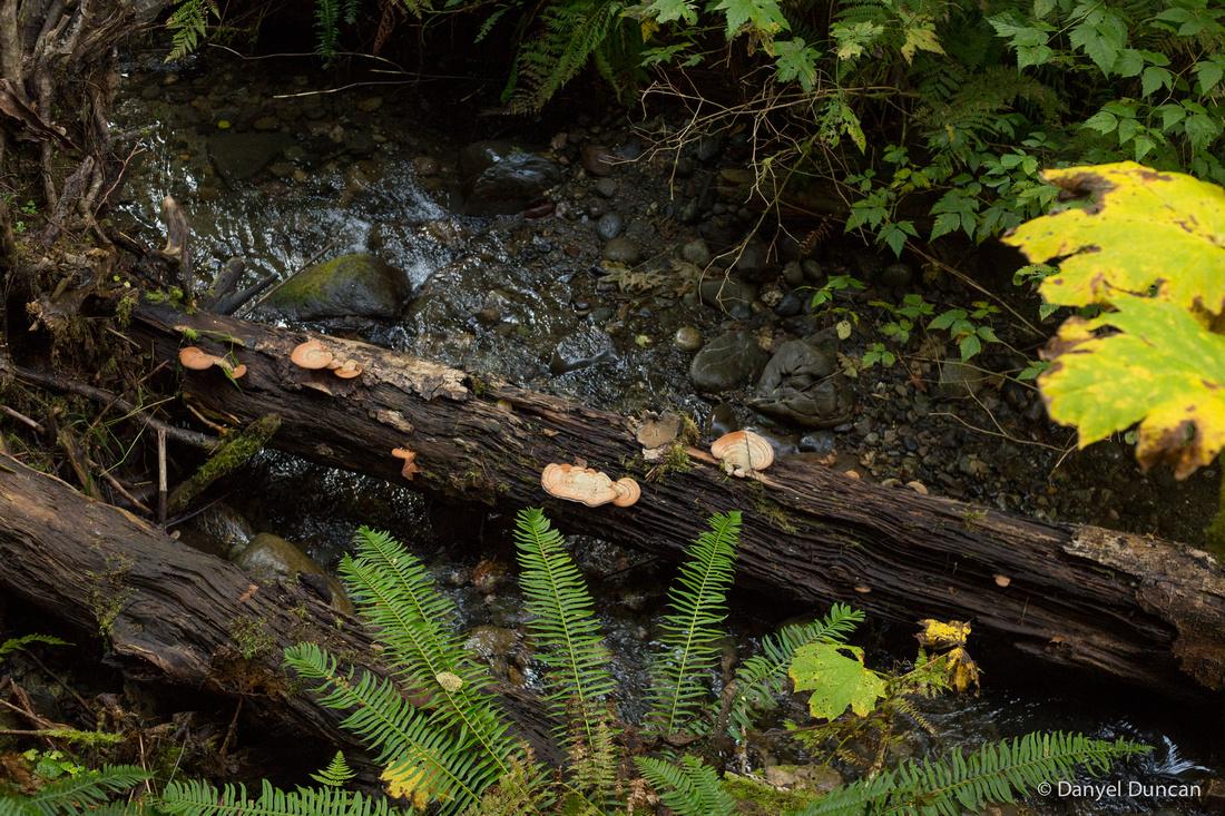 Washington-Lake-Tyee-Nature-Photography__MG_1770