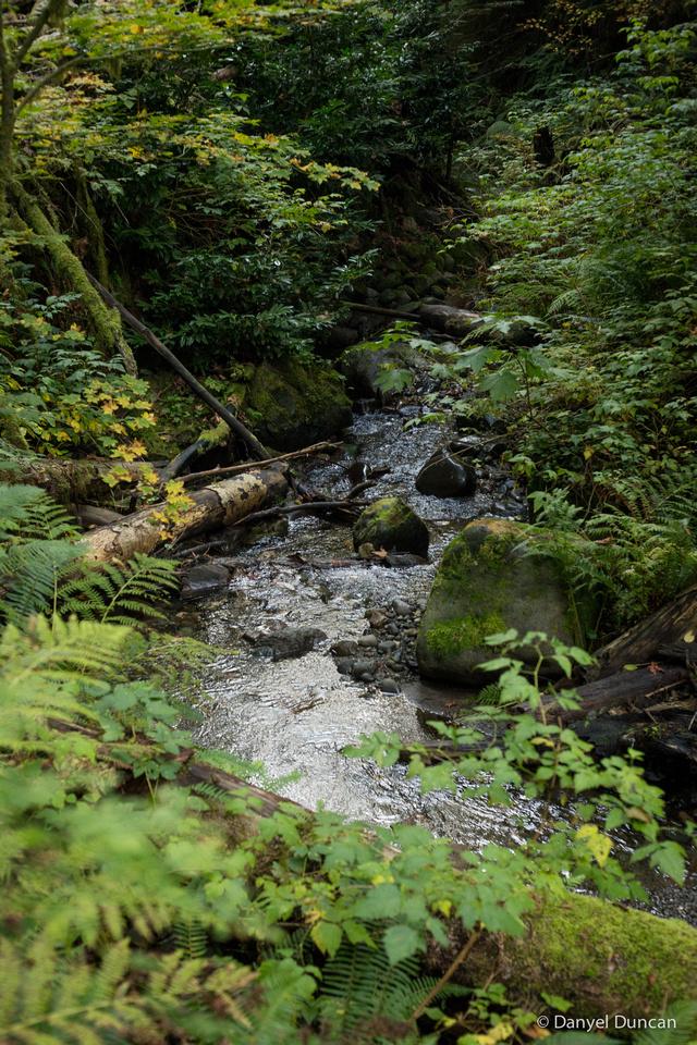 Washington-Lake-Tyee-Nature-Photography__MG_1771