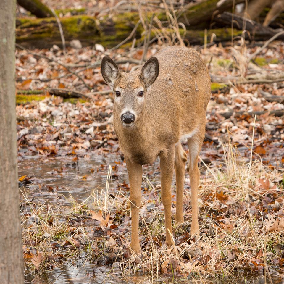Deer-Bucks-Thatcher-Woods-Chicago-2020-_TK_0046